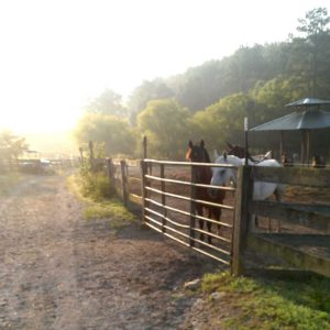 An early morning image at In Your Dreams Farm by on of the horse pastures.